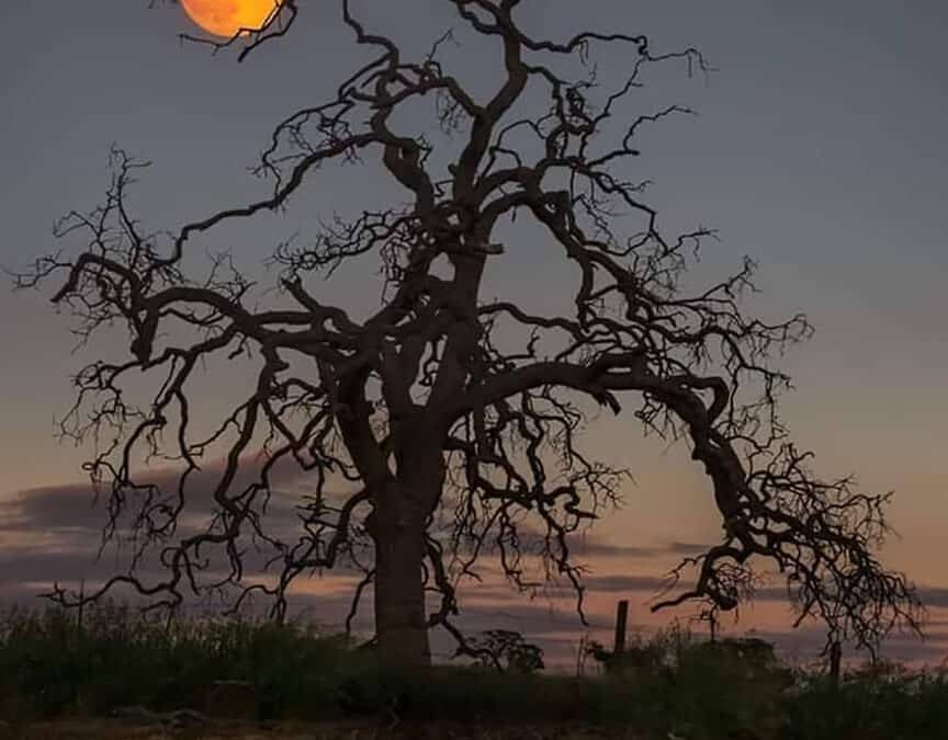 In the Light of Mountain Desert Nights