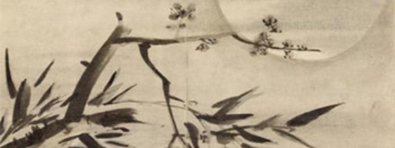 moon bamboo